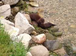 Minks and other animals can be found along the pathway