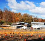 Visit Pond Hill Farm & pick your own pumpkins