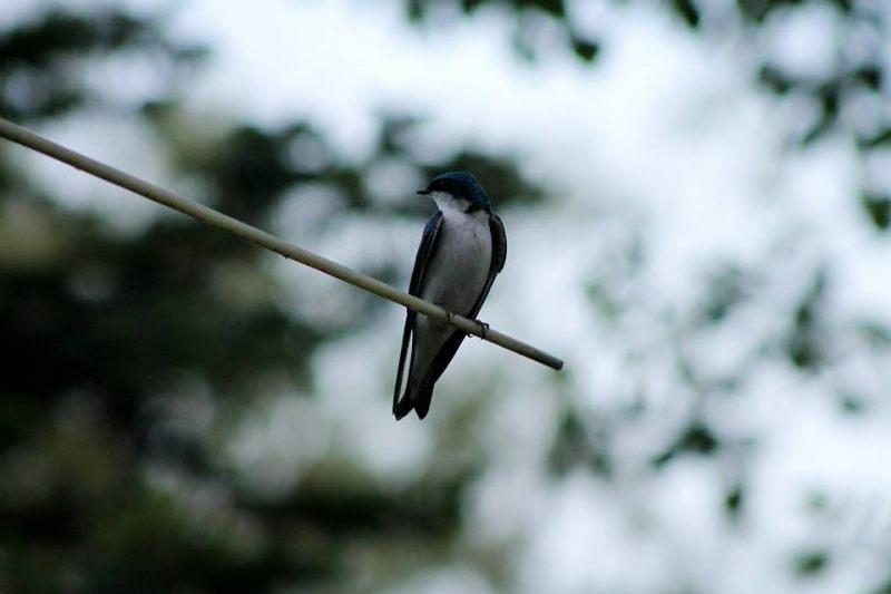 Birding Photo Gallery Up Travel