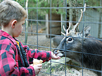 Enjoy feeding the deer, goats and Llama