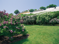 Fort Mackinac & Lilacs, Mackinac Island, Michigan