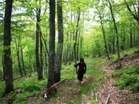 Hike on over 12 miles of trails on property