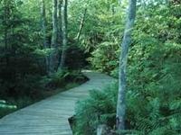 Boardwalk Rainey Wildlife Area, Manistique